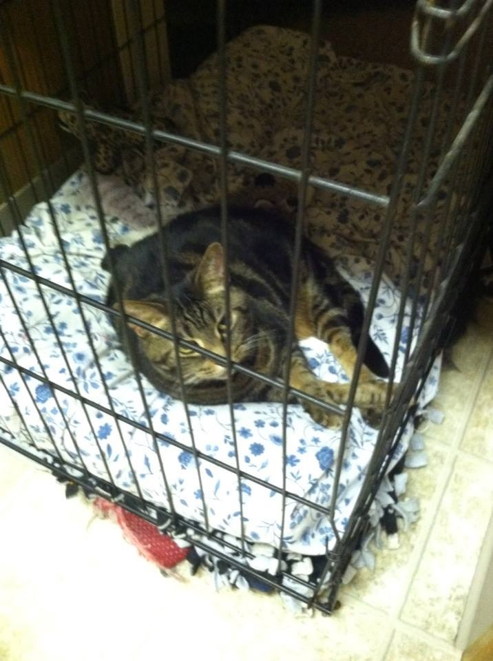 Cat in MY Kennel!!